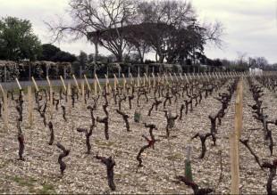 Vignes du Château Chasse-Spleen