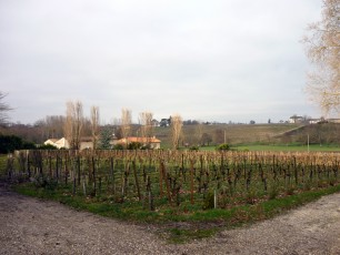 Les vignes du Château Gazin