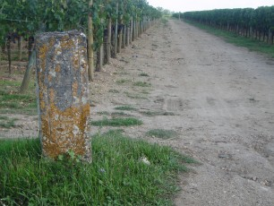Wijngaard Bordeaux Petrus