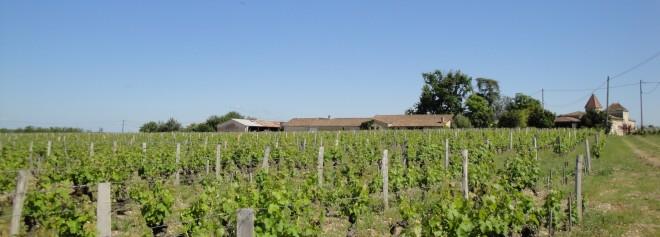 Château Rabaud-Promis et une petite partie de son vignoble