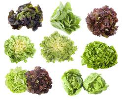 Salade: accords Mets et Vins